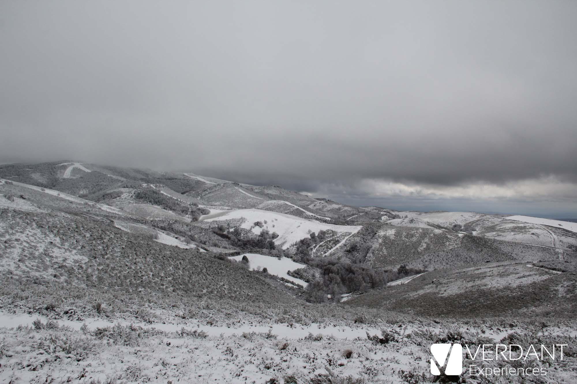 Bidueiral de Montederramo: nieve en el bosque de abedules más meridional de Europa